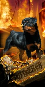Rottweiler Flames Beach Towel