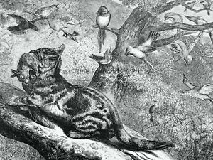 1871 Original Print WILDLIFE - CAT HUNTING SQUIRREL AND BIRDS