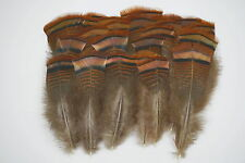 3 DOZEN #1 TURKEY BRONZE FLATS FEATHER PAINTING/CRAFTS