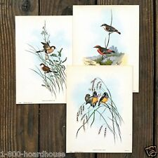 3 Vintage Original All Different AUDOBON SMALL BIRD ART LITHO Prints 1920s NOS