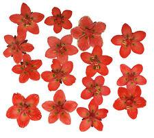 pressed flowers, marsh grass of parnassus, dark orange, art craft materials