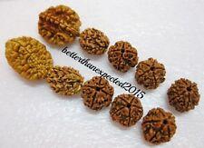 Natural Pure 2,3,4,5,6 Mukhi (Face) Rudraksh Rudraksha (10 pieces)~ Energized