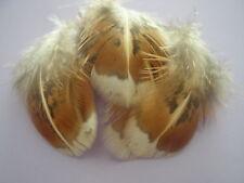 lot de 10 plumes faisane dorée 5 a 6 cm