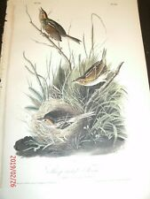 AUDUBON'S BIRDS of AMERICA - Plate 174 - SHARP-TAILED FINCH
