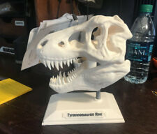 "T-Rex Dinosaur Skull-High-Quality Replica Statue- measures 6"" wide x 7"" tall"