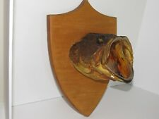 Vintage Largemouth Bass Taxidermy Fish Head Only Mount On Wood Man Cave