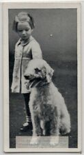 Bedlington Terrier Dog With Young Child 1930s Ad Trade Card