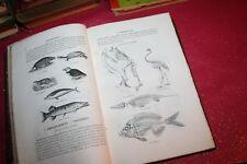 L'HISTOIRE NATURELLE DES ANIMAUX par Dr J.C. CHENU EDITION 1847 ILLUSTRATIONS
