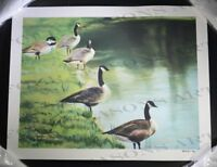 Preparing. Five Geese by a Grassy Pond. #2 of 95. Rosemary Begley (Hand Signed).