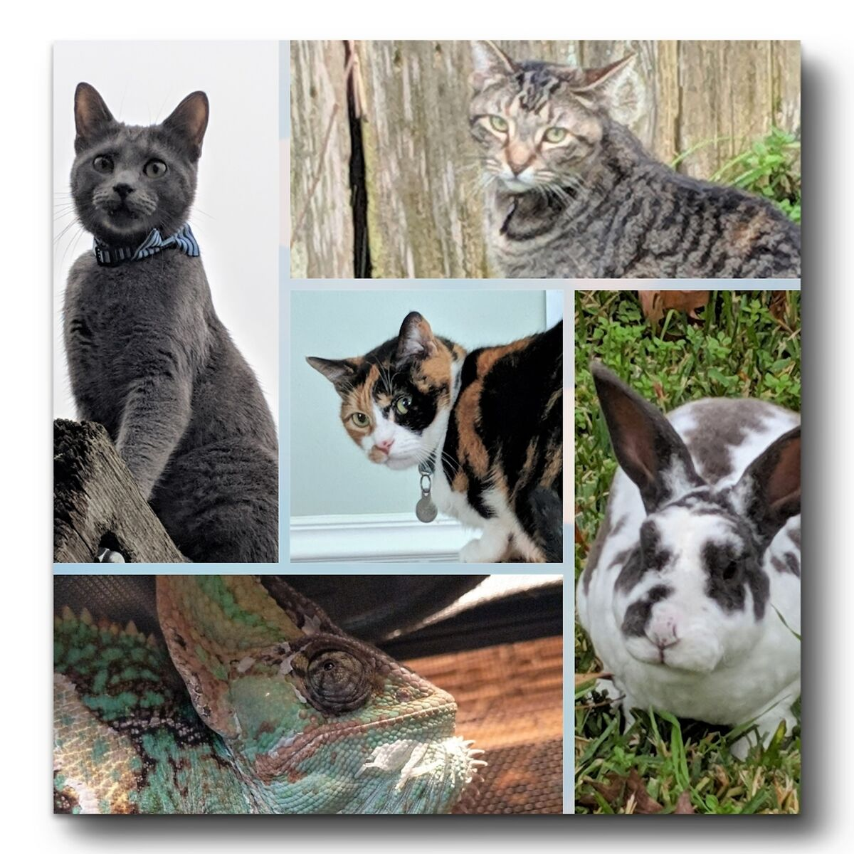 LXLS Pets