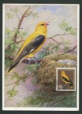 BRD MK 1964 402 uccelli PIROL ORO BECCACCIA Birds Maximum cartolina MAXIMUM CARD MC d2531