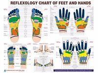 Brand New Acupressure Foot & Hand Reflexology Chart Eng. 20 - Laminated