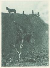 G0620 Australia - Mines d'étain et de cuivre - Stampa d'epoca - 1926 Old print
