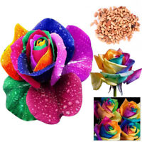 100/200Pcs Colorful Rainbow Rose Flower Seeds Home Garden Plants Color EB