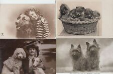 DOGS CHIENS 35 CPA Mostly Pre-1940 vrai photos