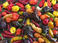 Partial Shade Chili Vegetable Plant Seeds