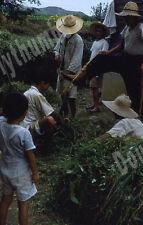 VTG 35mm Glass Slide 1953 South Korea War Cutting Grass for Fertilizer [C13]