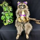 br29 Taxidermy Oddities Curiosities Raccoon w/ taxidermy baby chick home decor