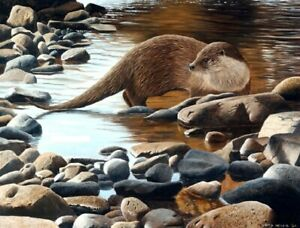 "Stunning Otter Art print "" The Otter Pool "" by David Miller original signed copy"