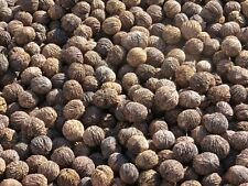 Black Walnuts In The Shell 9-10 lb.Box Full Good for Eat Bake , Squirrel Food