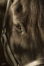 HORSE PHOTO ART PRINT Looking Through the Eyes of Love - Barry Hart Poster 19x13