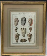 Fine Gold Leaf Framed Antique German 18c Hand Colored Sea Shell Print 142 NR KPB