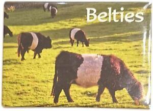 Belties (Scottish Belted Galloways Magnet by Lyrical Scotland