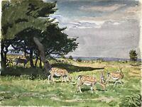 Naturalist Karl Adser 1912-1995 Cervi Sotto Alberi Am Mare Costa Dänemark Ostsee
