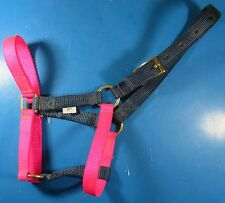 Basic Adjustable Foal Halter Blue And Pink Size: Large