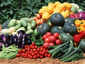 Vegetable Seeds,  $1.39!! 156 Heirloom Varieties For GARDEN/ STORAGE Organic