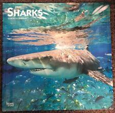 Sharks Wall Calendar 2020