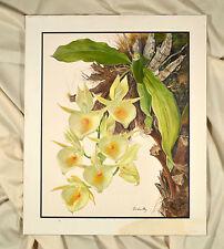 Catasetum pileatum Rchb. F. orchidee Orchid ORIGINALE GUAZZO ca 1850 firmato