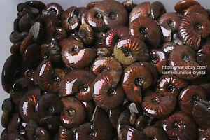 2.2lb Wholesale Price! 80-130 Pcs Rainbow Ammonite Fossil Crystal Specimen