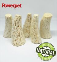 Beef Horn Antlers- 100% All Natural Dog Chew Treats- BRC Certified