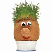 Grow Your Own Mr Grasshead Toy - Great Fun For Kids Birthday Gift Idea