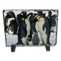 Emperor Penguin Family Rock Slate Photo Frame - Rectangle