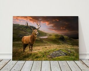 Red deer stag in dramatic mountain landscape canvas picture print