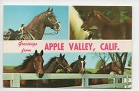Vintage 1960s Horse Collage Greetings from Apple Valley California CA Postcard