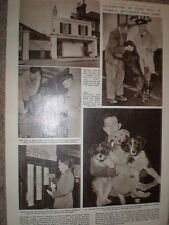 Photo article centenary of Battersea sogs home london 1960