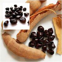 Tamarindus indica 50 Seeds, Sweet Tamarind, Fruits Seeds, Tropical Seasonal Thai