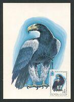 RUSSIA MK FAUNA VÖGEL BIRDS OISEAUX MAXIMUMKARTE CARTE MAXIMUM CARD MC CM d241