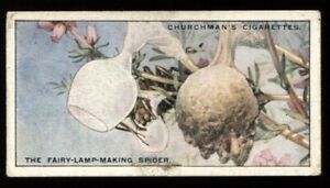Tobacco Card, Churchman, NATURES ARCHITECTS, 1930, Fairy Lamp Making Spider, #22
