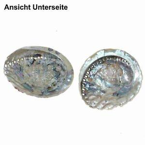 2x Paua Abalone Muschel 12-15cm Seeohr Perlmutt Schnecke Schale Seeopal Seashell