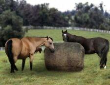 "Showman Adjustable 48/""-54/"" 1200 Denier Winter Pony//Yearling Horse Blanket"