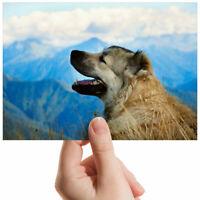 "Caucasian Sheepdog Mountains Small Photograph 6"" x 4"" Art Print Photo Gift #3179"