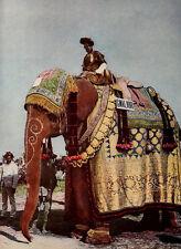 1912 Gwalior Elephant Great Coronation Delhi Durbar India Chromolithograph Photo