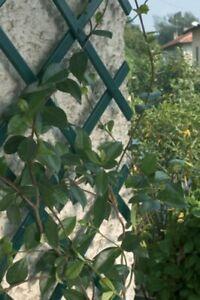 2  Green Expanding Trellis Plastic Garden Trellis 150 X 40cm 1.5m New PVC