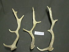 Lot of 3 Fallow shed antlers for decorations lodge cabin decor Af0399