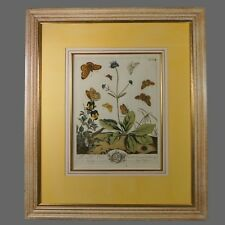 18th Century Hand Colored Botanical Engraving Moses Harris Butterfly Print C1766