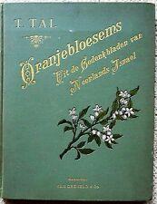 ANTIQUE ORANJEBLOESEMS BY T TAL, UIT DE GEDENKBLADEN VAN NEERLANDS ISRAEL, 1898